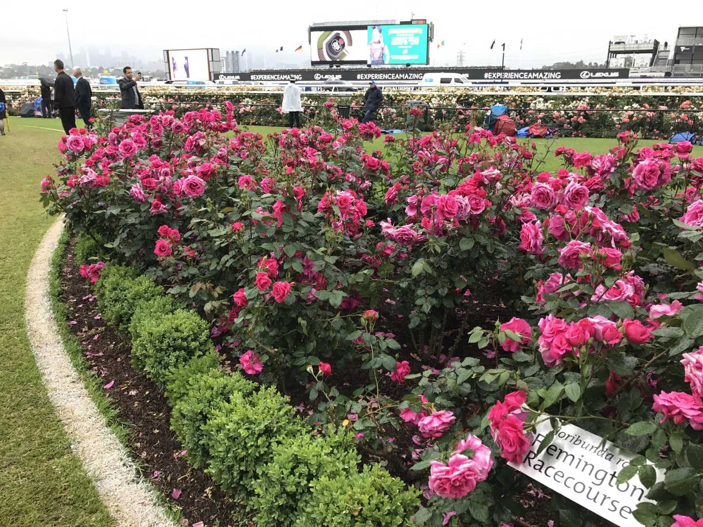 7 things I didn't know about the Melbourne Cup - Roses