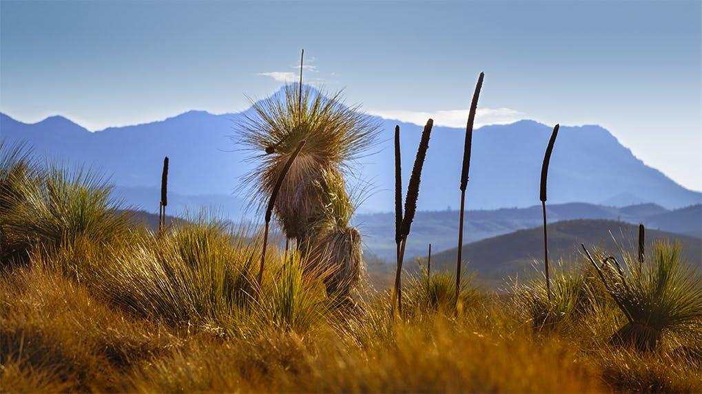 Flinders Ranges photo by @johnnieddu