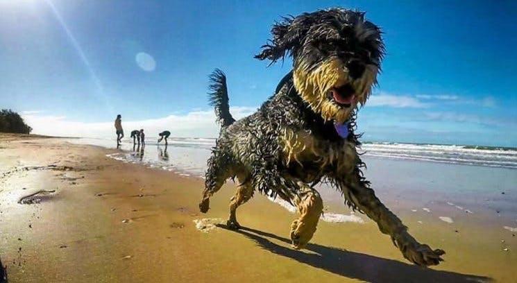 QLD Balgal Beach from Instagram tom_ed81
