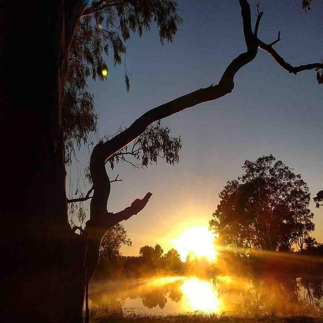 Myall Park Botanic Garden Sunrise - image Megan McNicholl