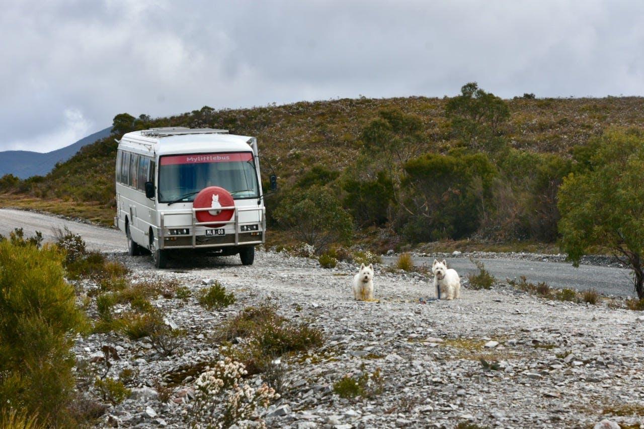 Lis Brown Camper Van