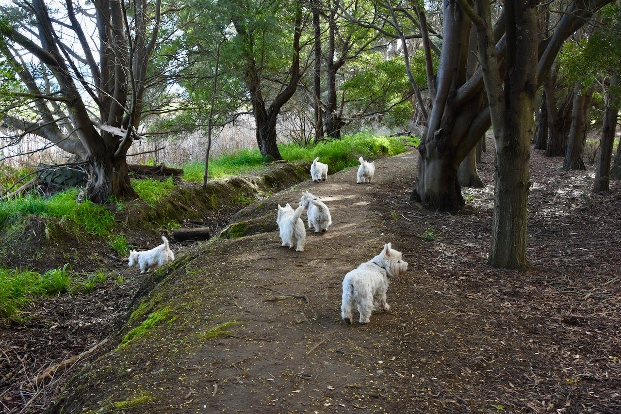 puppy adventures