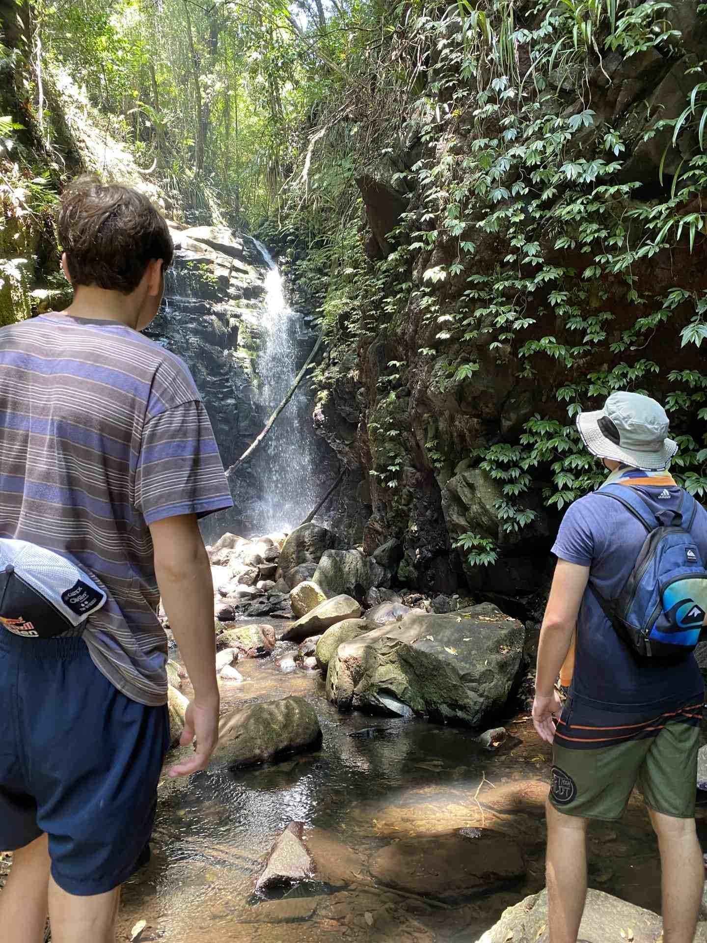 Lamington National Park Falls