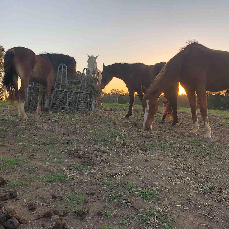 Veterans Retreat Horses