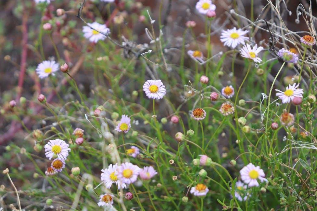 Flowers at Lake Bindegolly
