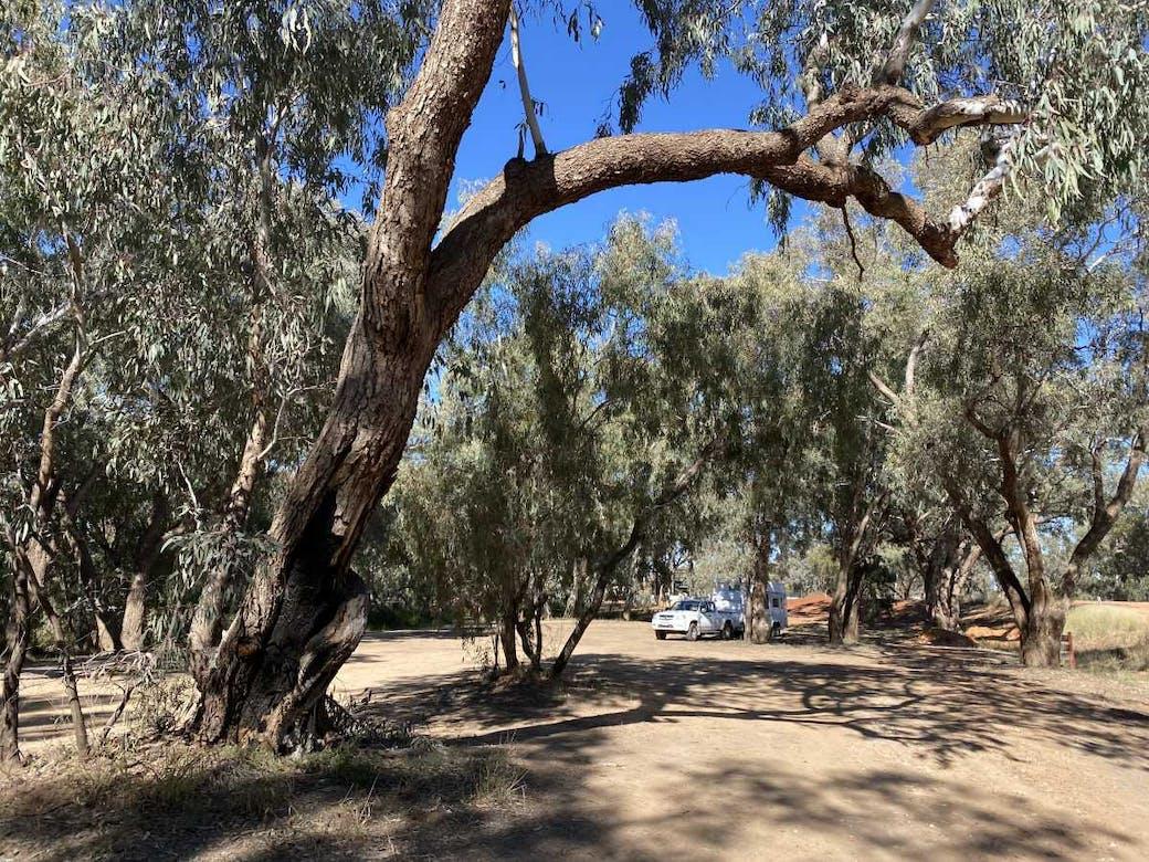 Bollon - Wallam Creek Camping Area