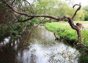 Mole Creek Caravan Park2