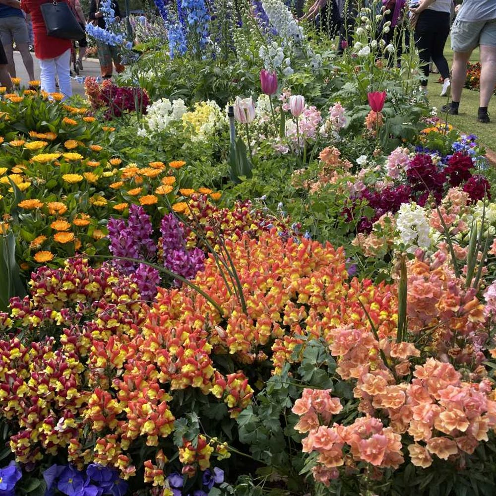 Toowoomba Carnival Of Flowers Queensland - 6777