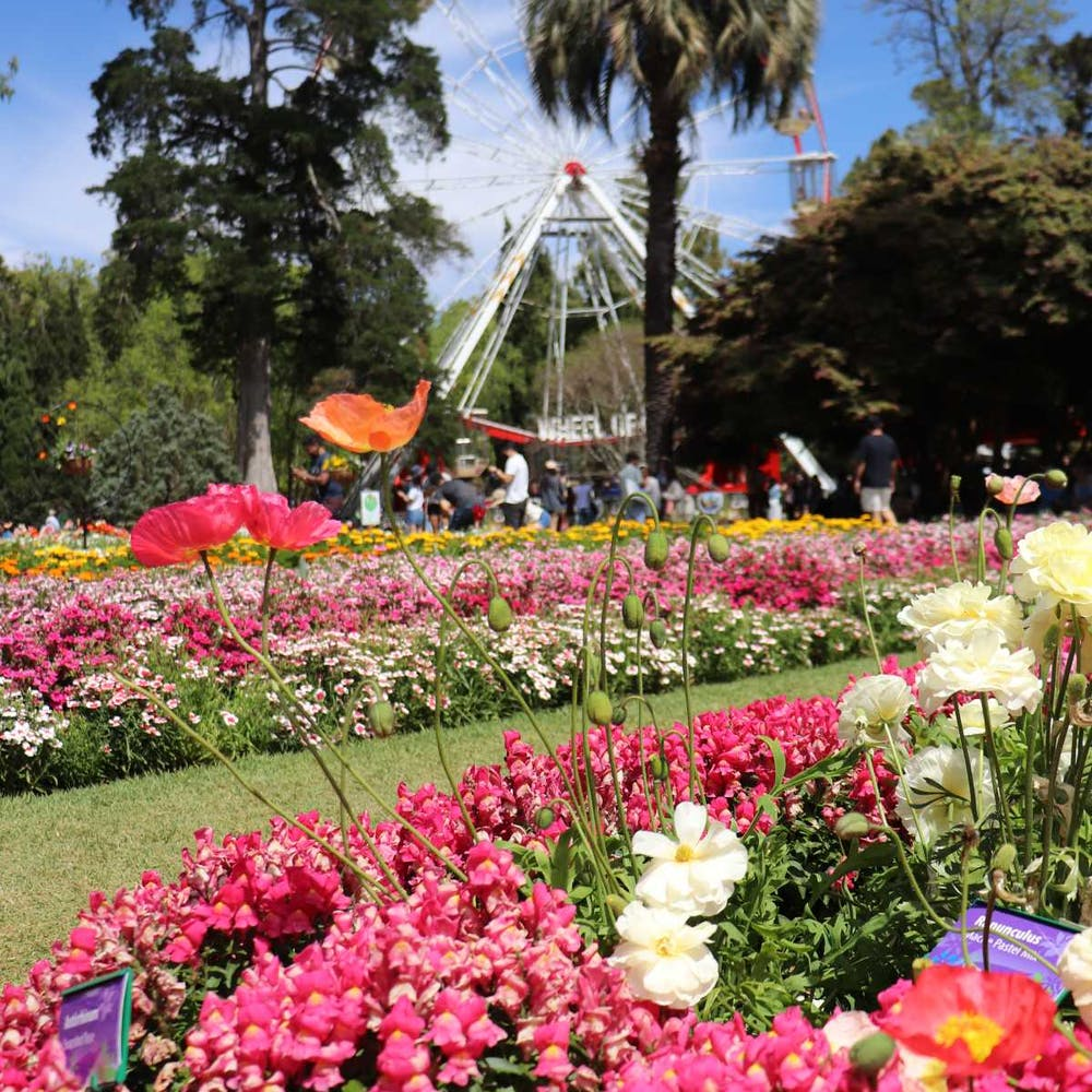 Toowoomba Carnival Of Flowers Queensland - 9004