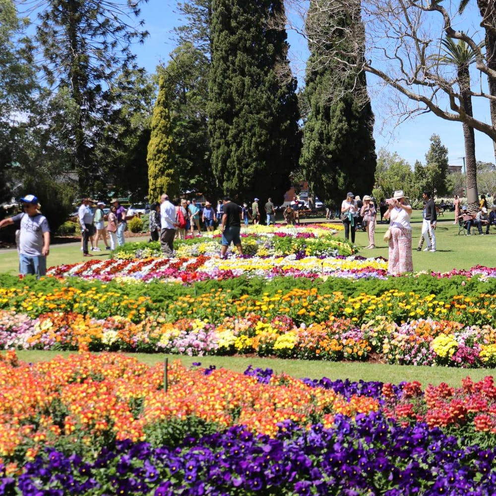 Toowoomba Carnival Of Flowers Queensland - 9011